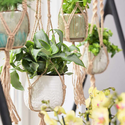 Plant Pot Knotted Hanging Rope - Planted
