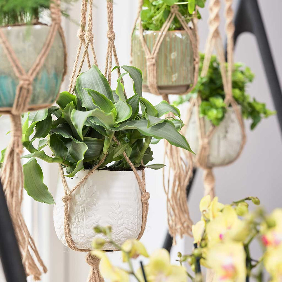 Plant Pot Knotted Hanging Rope