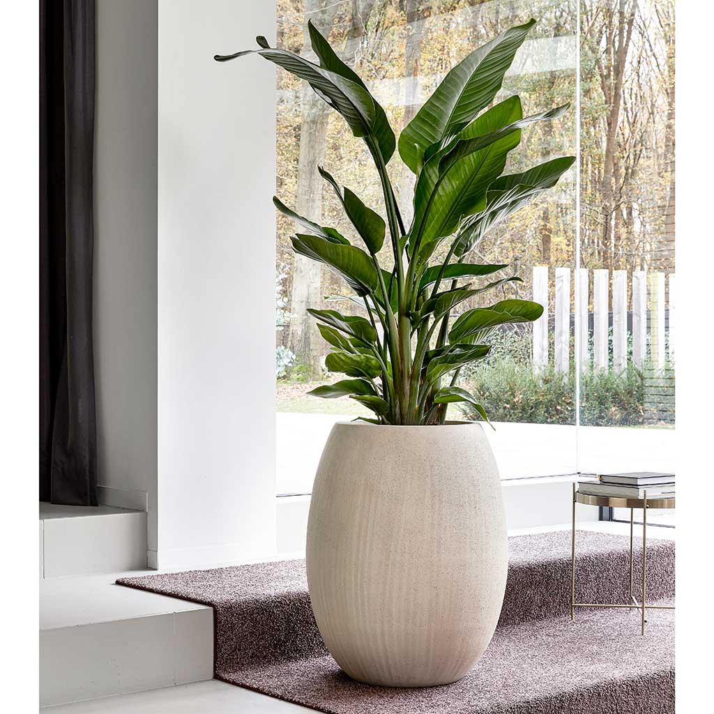 Polystone Coated Plain Balloon Planter Natural