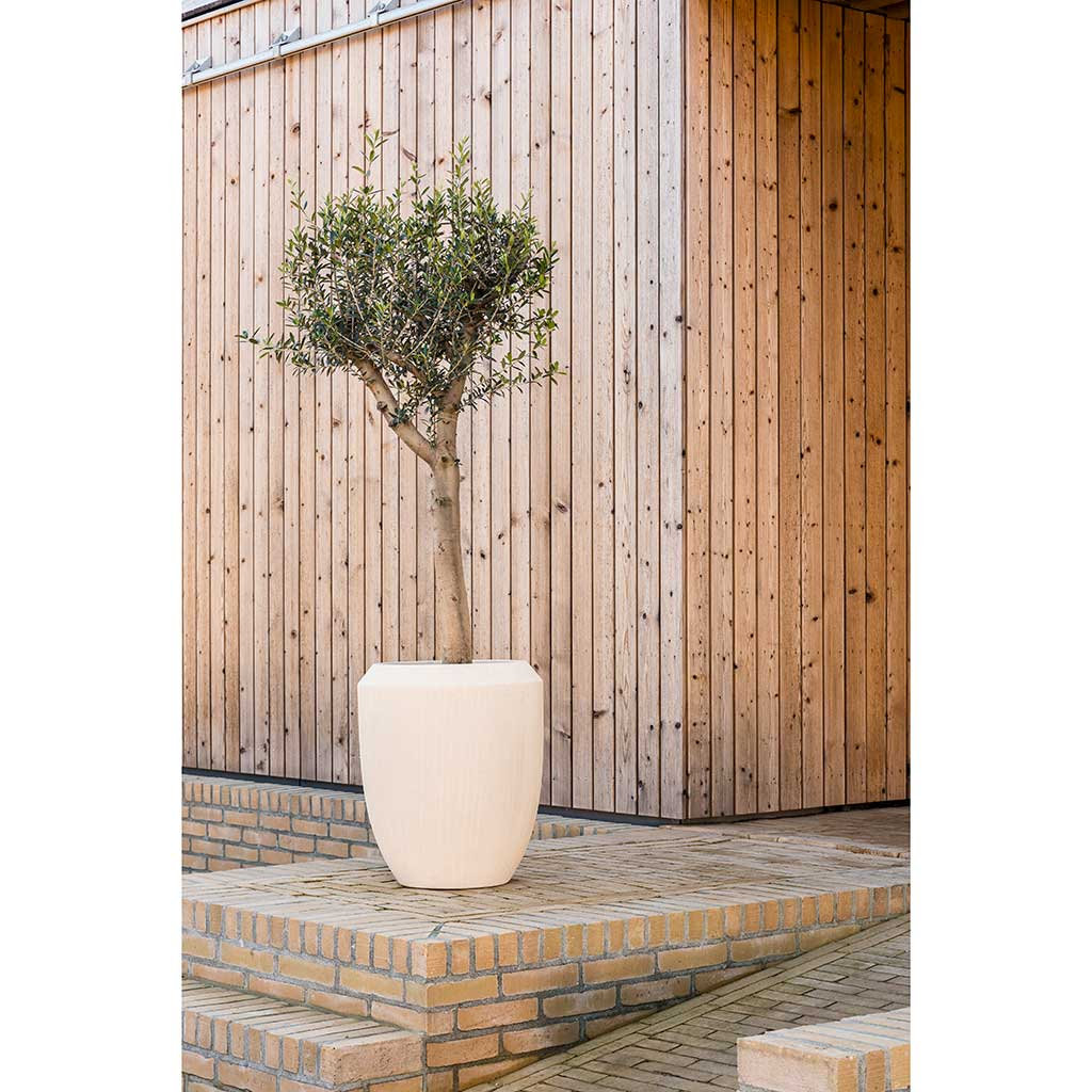 Polystone Coated Plain Coppa Planter Natural