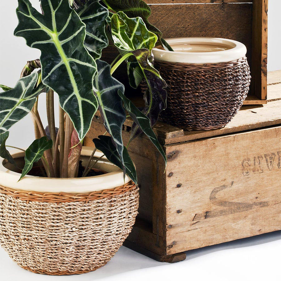 Seagrass Cover Plant Pot - Natural 21cm