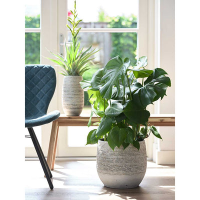 Stijn Plant Pot - Grey - Monstera deliciosa - Swiss Cheese Plant - Moss Pole