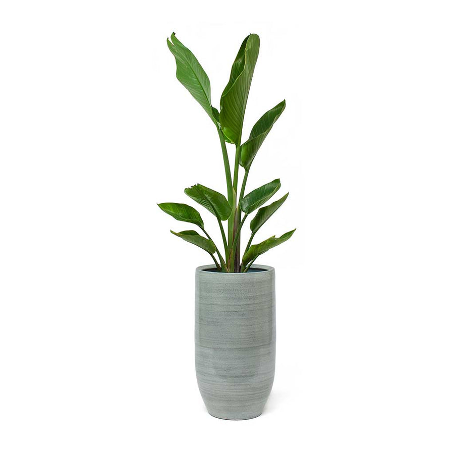 Cresta Tall Plant Vase - Ice Blue