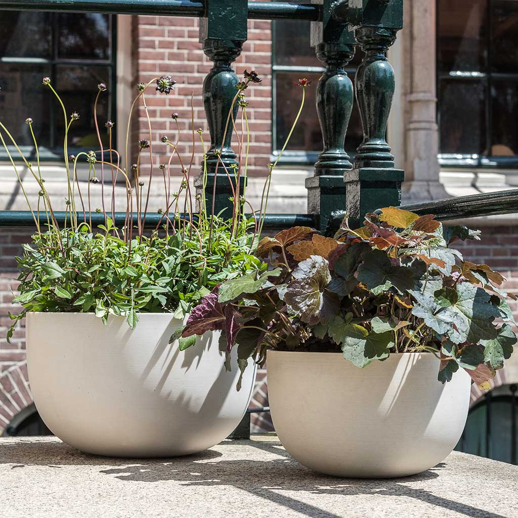 Sunny Plant Bowl - Natural White