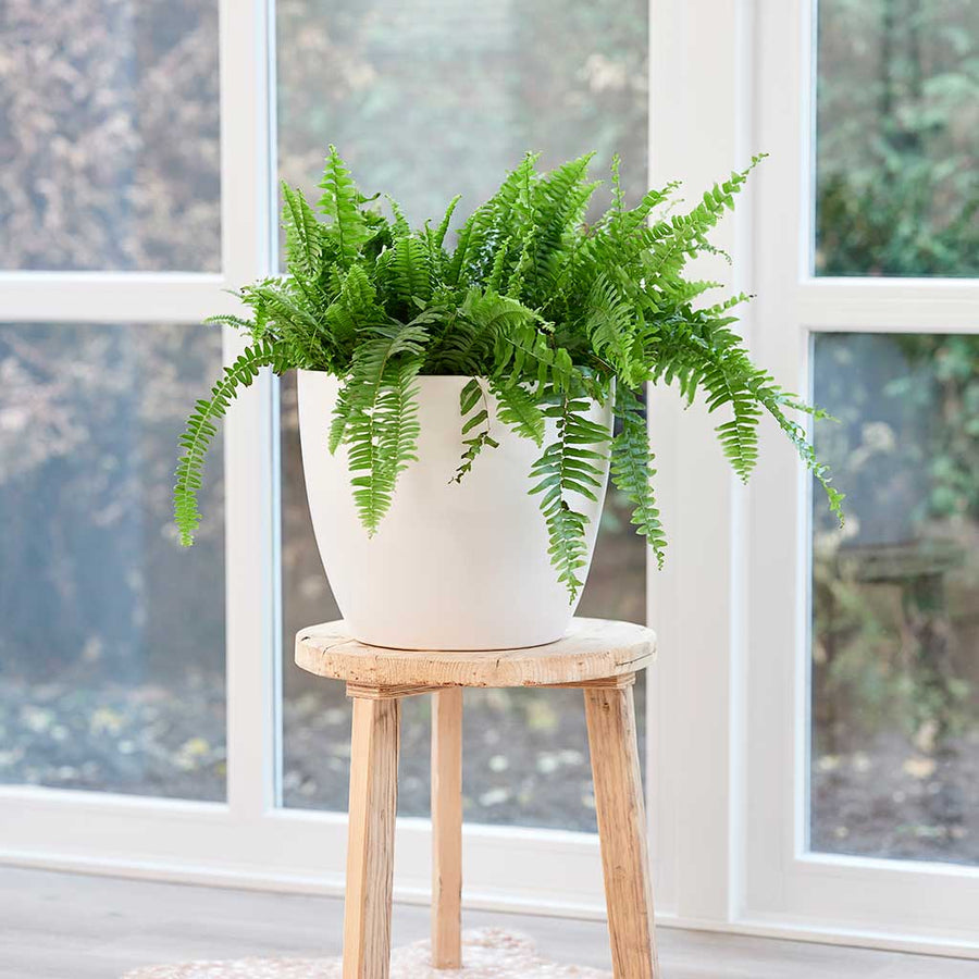 Sven Plant Pot - White - Small