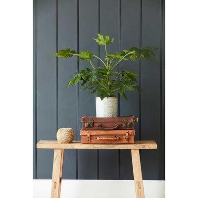 Tuscany Plant Pot - Grey with Philodendron