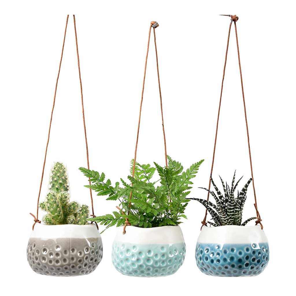 Baby Dotty Hanging Indoor Plant Pots Trio