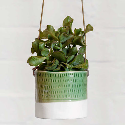 Pie Crust Hanging Indoor Plant Pot - Planted