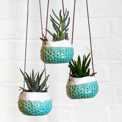 Baby Dotty Hanging Indoor Pot - Turquoise - Planted