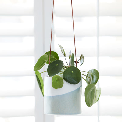 Dip Hanging Indoor Pots - Planted