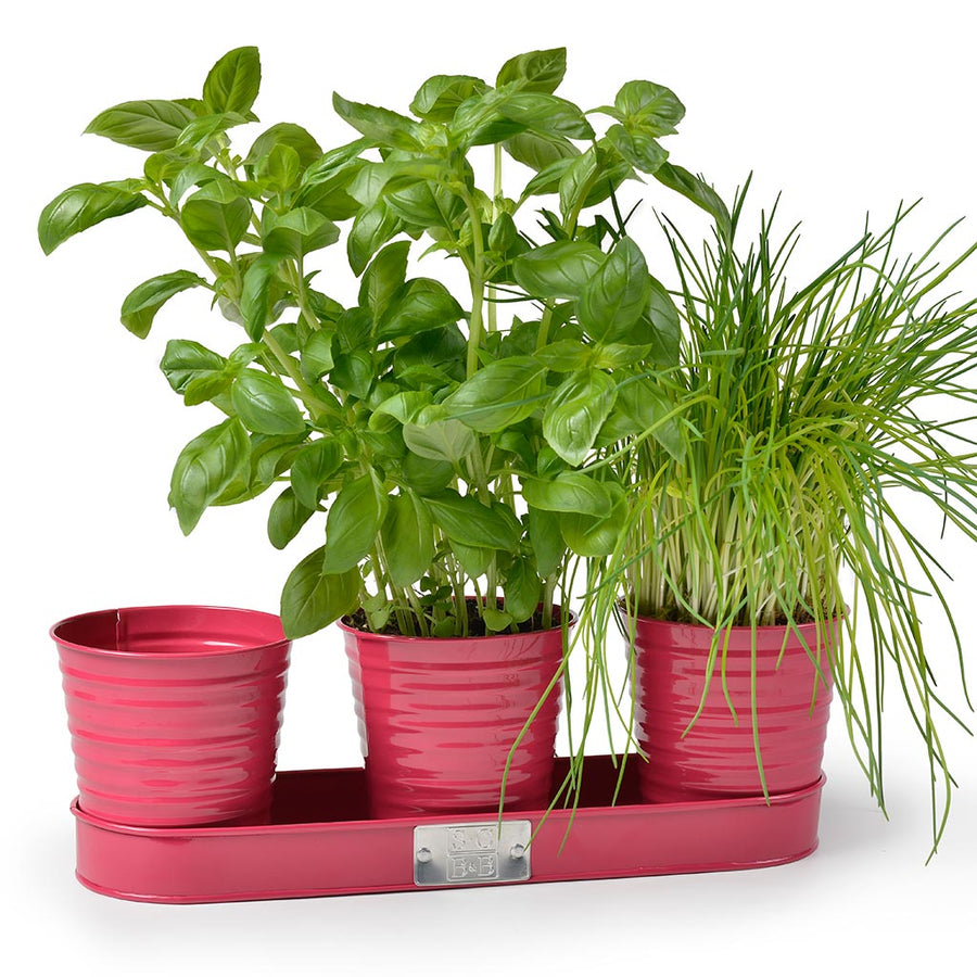 Sophie Conran Set of 3 Herb Pots - Raspberry