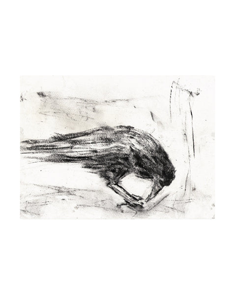 CROW STUDIES: NO.1