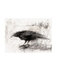 CROW STUDIES: NO.2