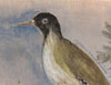 Original Framed Painted Panel - Green Woodpecker Pair