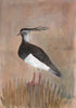 Original Framed Painted Panel - Lapwing