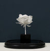 Studies in Paper: Rosa Canina (Dog Rose)