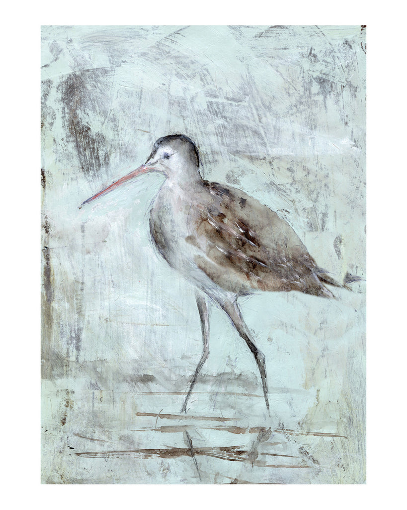 Bird Studies: Godwit Walking