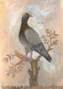 Painted Bird | Rock Dove