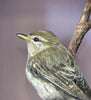 Paper Taxidermy | Willow Warbler