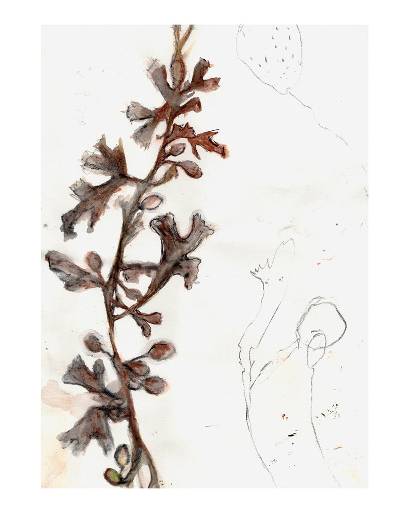 Beach Finds No6. Seaweed study 2