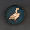 Paper Taxidermy | Cygnet