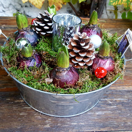 Hyacinth Candle Bowl, Plant - Oasis Florists