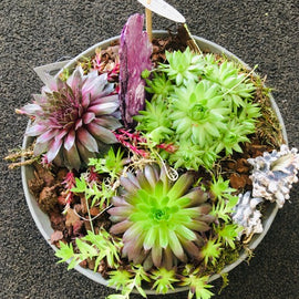 Alpine Bowl