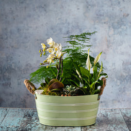 Indoor Miniature Orchid Planter