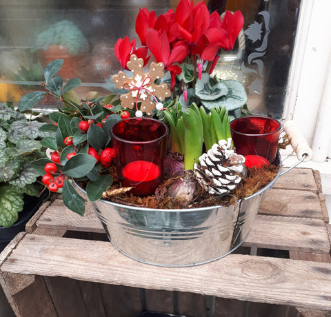 Frosty Winter Planter, Plant - Oasis Florists