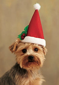 Christmas Costume Accessory for pet- Santa Claus Dog Hat