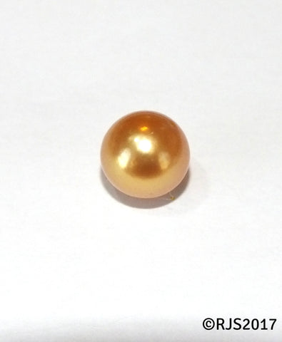 Pick A Pearl Oyster Freshwater Cultured Loose Pearl Round Gold for Pearl Cages, Charms, Necklaces