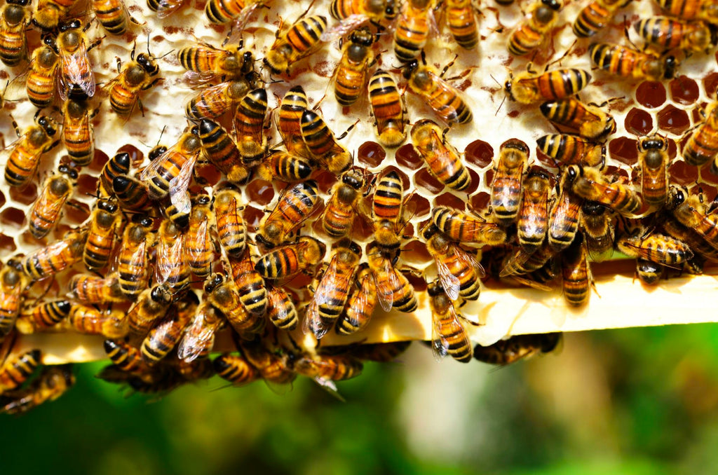 About The Bee Conservancy - April's #EveryCaseCounts Charity Partner!