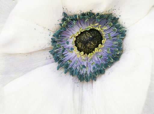 Eye of the Anemone