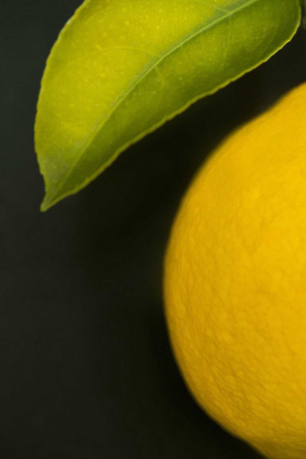 Painted Meyer Lemon