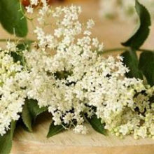 Elderflower Botanical Face Butter | Sweet Life Spa