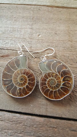Fossil Ammonite Pendant Earrings Medium Size