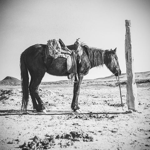 Black and White Vintage Photography by Senator Barry Goldwater (Navajo Pony) - Art Prints and Wall Decor