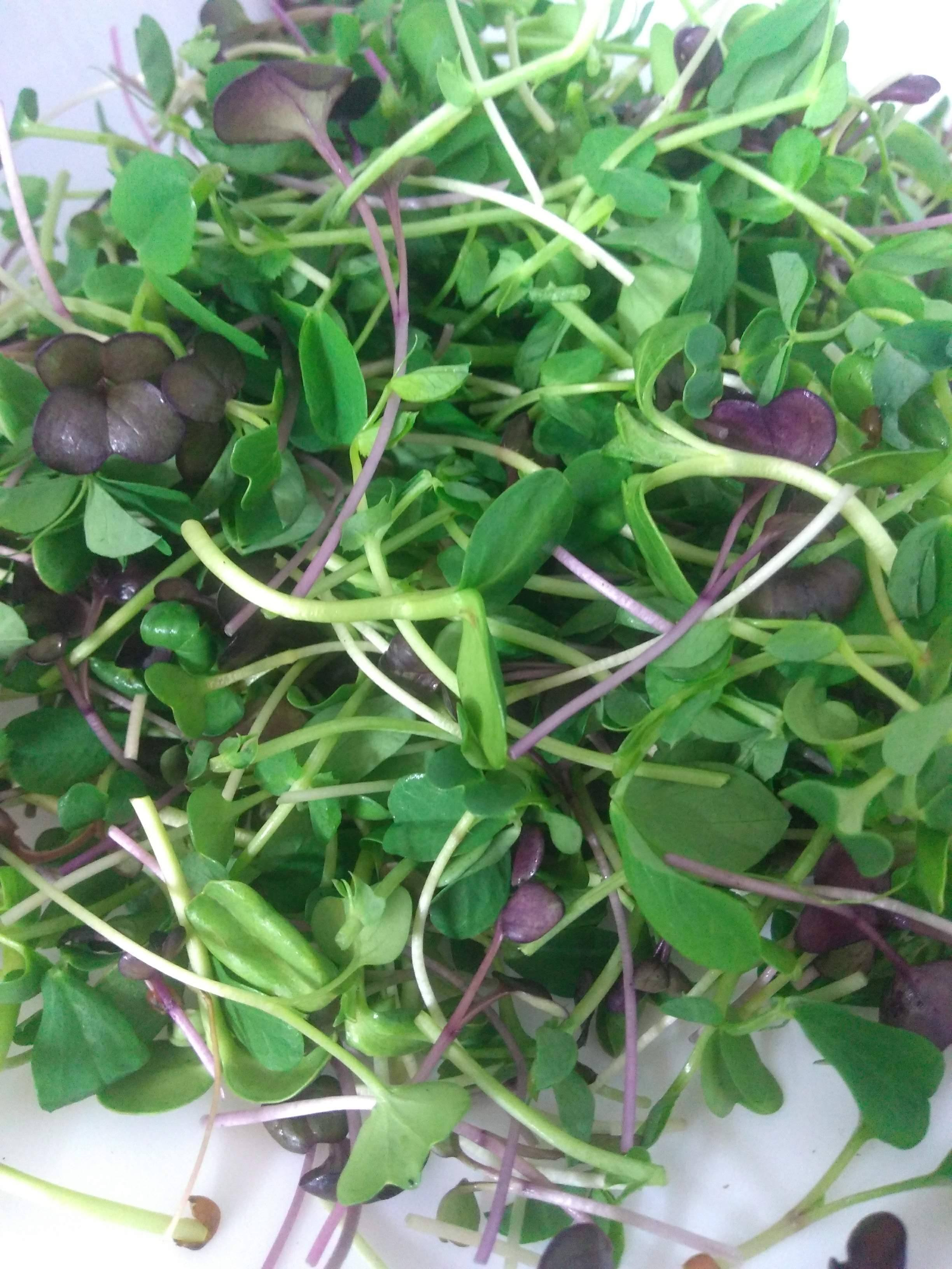 Mixed Microgreens - White Goat Coffee