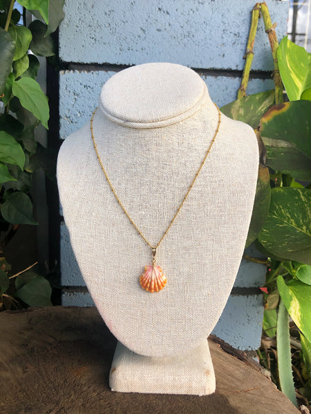 Sunrise shell on 14k gold fill chain