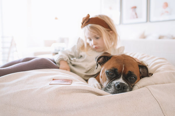 Why Dogs Dig in their Beds