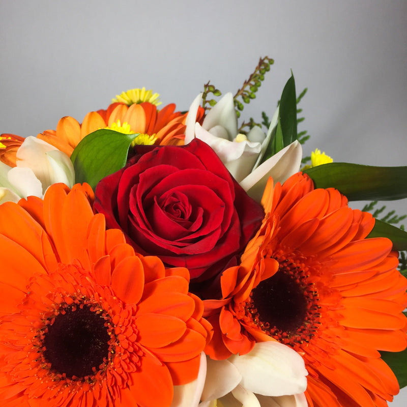close up of orange gerberas from Porirua