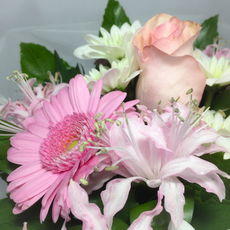 Gerberas and other pink Wellington flowers