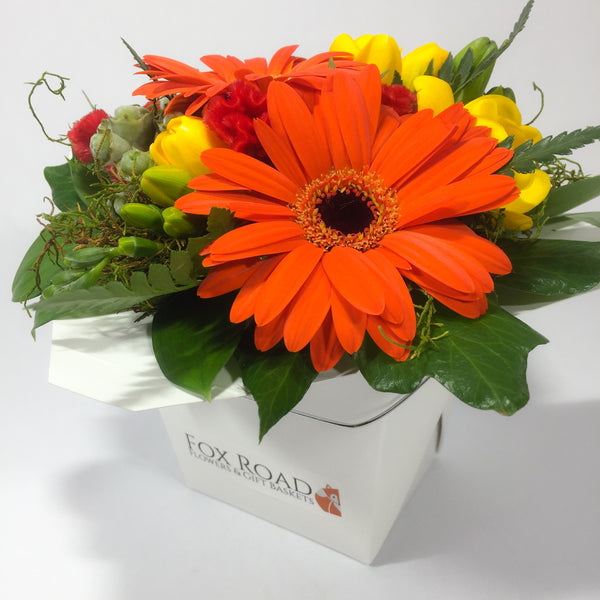 Gerbera flowers from Upper Hutt
