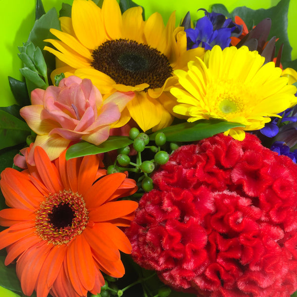 Bright sunflower for porirua delivery