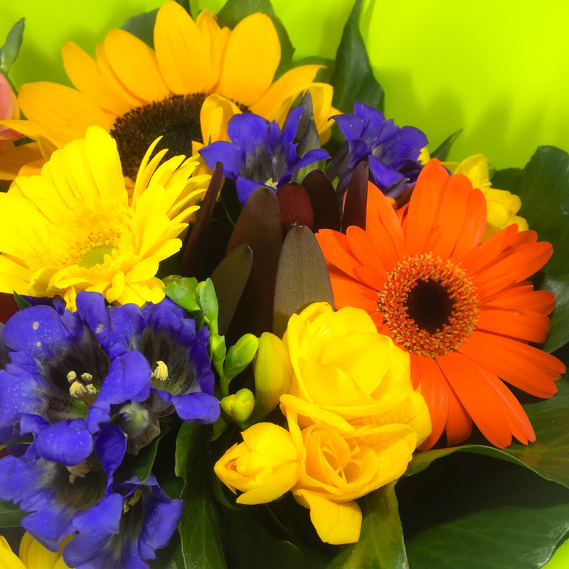 Gerberas for Valentine's Day in Lower Hutt and Porirua