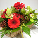 Wellington florist picking red and white gerberas