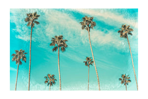 The Palms Photography Print