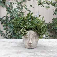 Load image into Gallery viewer, The Picasso Planter