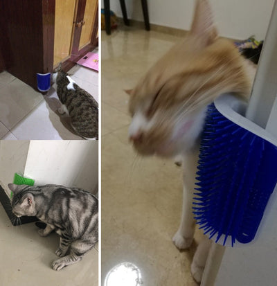 Self Brush for Cats + Catnip