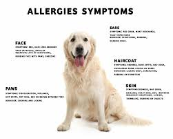 Dog Allergies by Yourdogadvisor.com